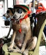 Dogs begging holding little baskets